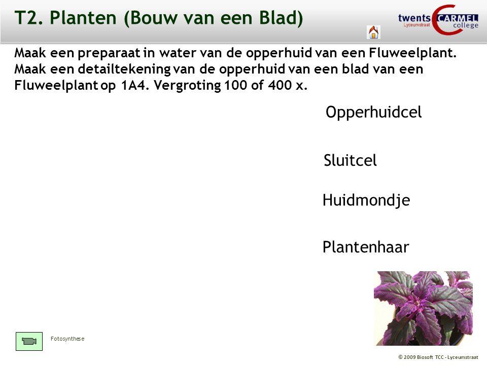 © 2009 Biosoft TCC - Lyceumstraat T2. Planten (Bouw van een Blad) Maak een preparaat in water van de opperhuid van een Fluweelplant. Maak een detailte