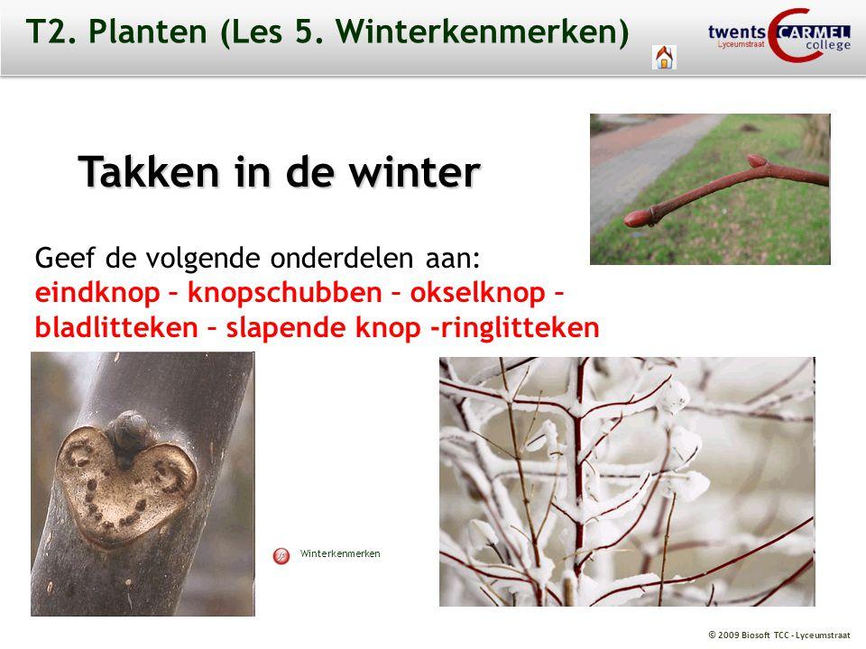 © 2009 Biosoft TCC - Lyceumstraat T2. Planten (Les 5. Winterkenmerken) Takken in de winter Geef de volgende onderdelen aan: eindknop – knopschubben –