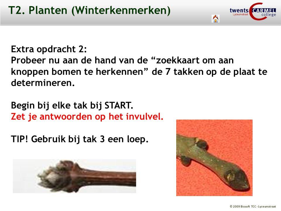 """© 2009 Biosoft TCC - Lyceumstraat T2. Planten (Winterkenmerken) Extra opdracht 2: Probeer nu aan de hand van de """"zoekkaart om aan knoppen bomen te her"""