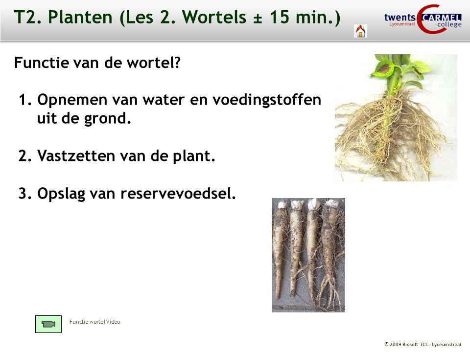 © 2009 Biosoft TCC - Lyceumstraat T2. Planten (Les 2. Wortels ± 15 min.) 1. Opnemen van water en voedingstoffen uit de grond. 2. Vastzetten van de pla