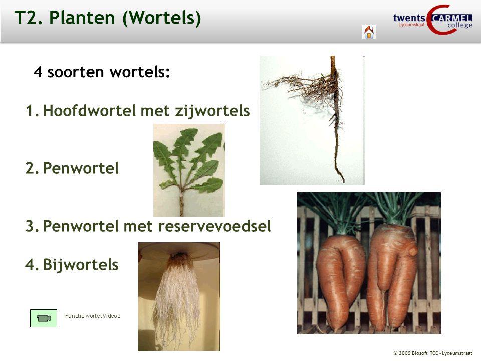 © 2009 Biosoft TCC - Lyceumstraat T2. Planten (Wortels) 4 soorten wortels: 1.Hoofdwortel met zijwortels 2.Penwortel 3.Penwortel met reservevoedsel 4.B