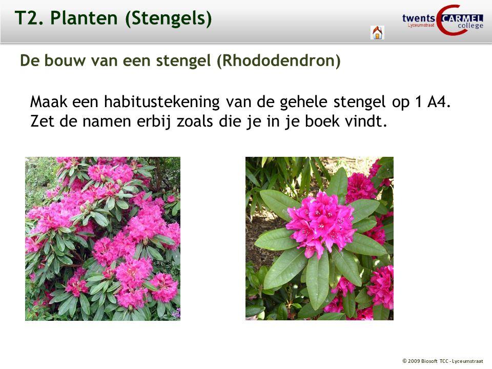 © 2009 Biosoft TCC - Lyceumstraat T2. Planten (Stengels) De bouw van een stengel (Rhododendron) Maak een habitustekening van de gehele stengel op 1 A4