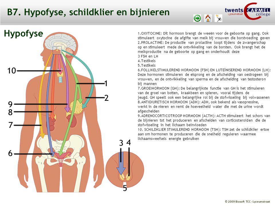© 2009 Biosoft TCC - Lyceumstraat B7. Hypofyse, schildklier en bijnieren Hypofyse 1.OXYTOCINE: Dit hormoon brengt de weeën voor de geboorte op gang. O