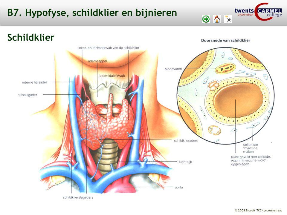 © 2009 Biosoft TCC - Lyceumstraat B7. Hypofyse, schildklier en bijnieren Schildklier