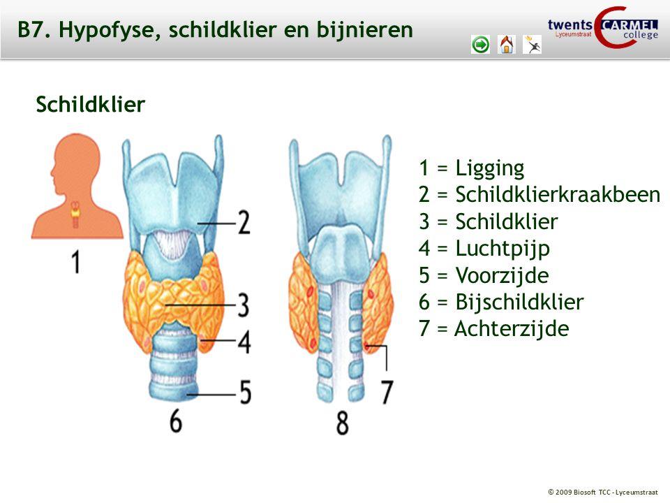 © 2009 Biosoft TCC - Lyceumstraat B7. Hypofyse, schildklier en bijnieren 1 = Ligging 2 = Schildklierkraakbeen 3 = Schildklier 4 = Luchtpijp 5 = Voorzi