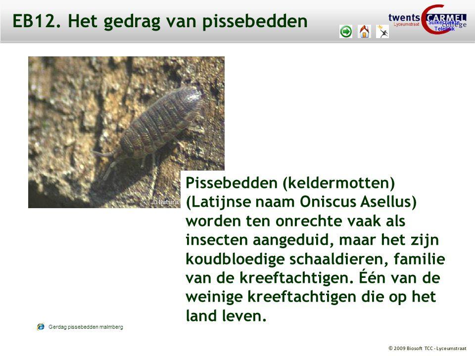 © 2009 Biosoft TCC - Lyceumstraat Suikerziekte Teleblik EB12. Het gedrag van pissebedden Pissebedden (keldermotten) (Latijnse naam Oniscus Asellus) wo