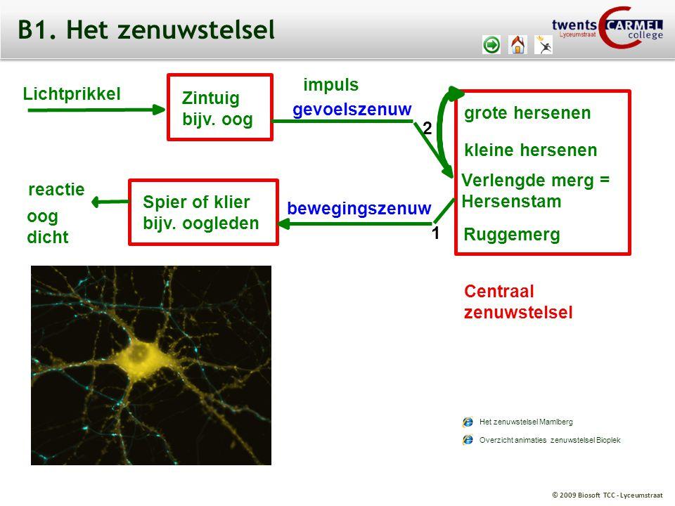 © 2009 Biosoft TCC - Lyceumstraat Lichtprikkel Zintuig bijv. oog impuls reactie oog dicht grote hersenen kleine hersenen Verlengde merg = Hersenstam R