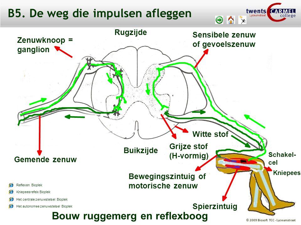 © 2009 Biosoft TCC - Lyceumstraat Bouw ruggemerg en reflexboog Zenuwknoop = ganglion Rugzijde Schakel- cel Sensibele zenuw of gevoelszenuw Grijze stof
