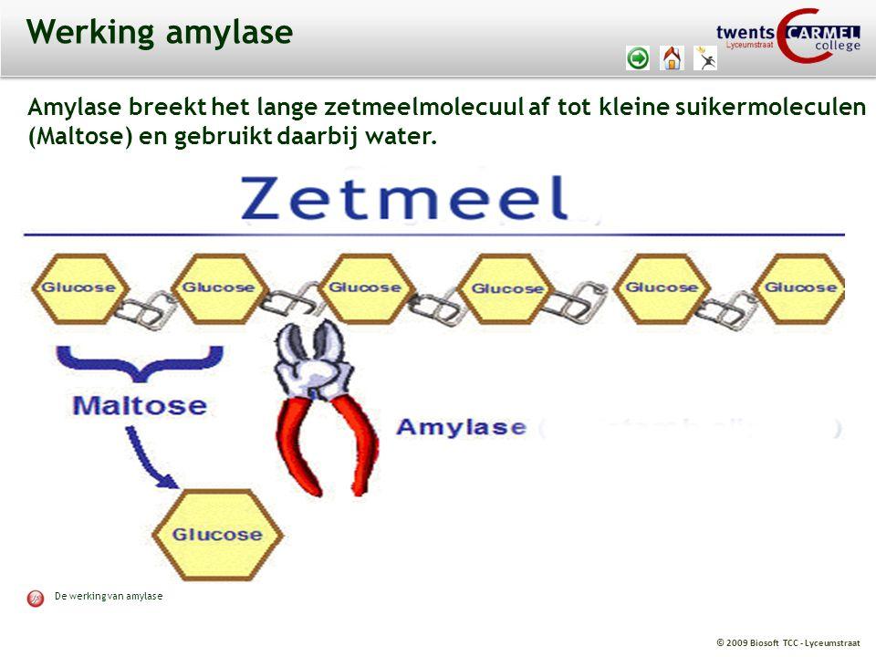 © 2009 Biosoft TCC - Lyceumstraat Werking amylase Amylase breekt het lange zetmeelmolecuul af tot kleine suikermoleculen (Maltose) en gebruikt daarbij
