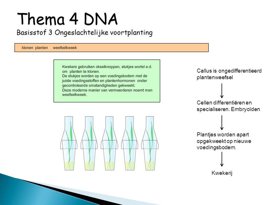 Callus is ongedifferentieerd plantenweefsel Cellen differentiëren en specialiseren. Embryoïden Plantjes worden apart opgekweekt op nieuwe voedingsbode