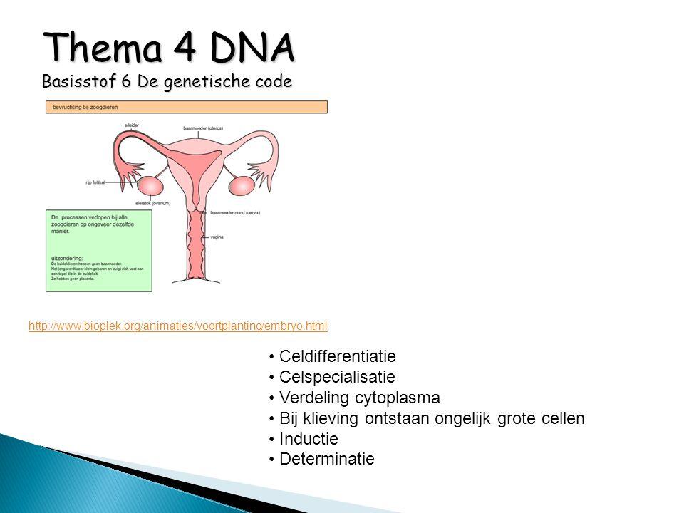 Thema 4 DNA Basisstof 6 De genetische code http://www.bioplek.org/animaties/voortplanting/embryo.html Celdifferentiatie Celspecialisatie Verdeling cyt