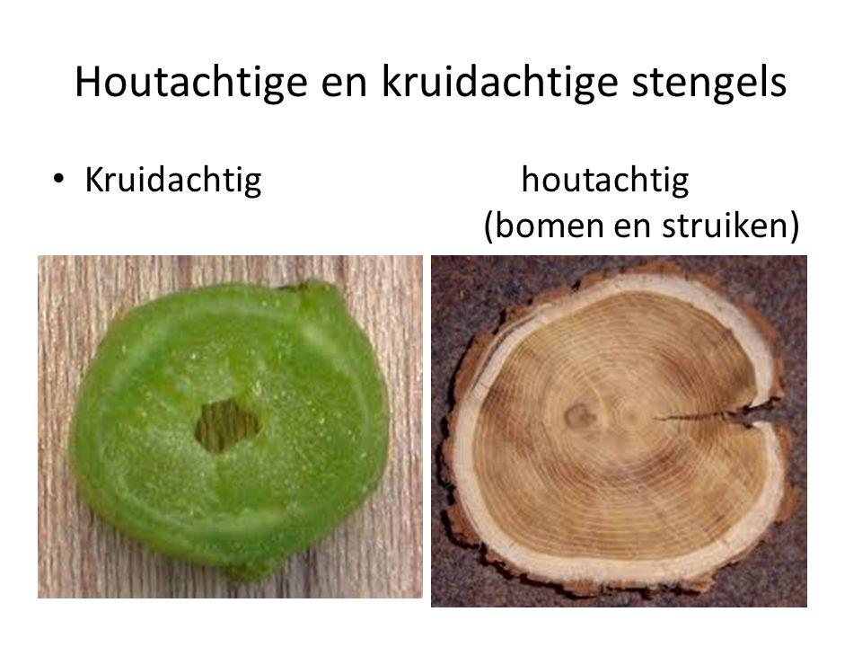 Houtachtige en kruidachtige stengels Kruidachtig houtachtig (bomen en struiken)