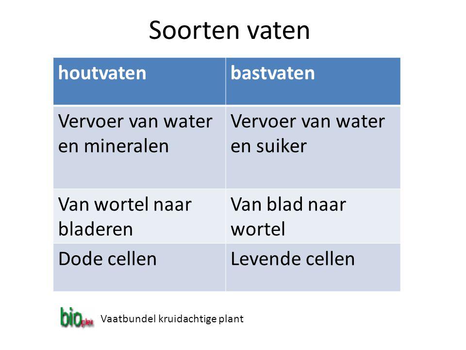 Soorten vaten houtvatenbastvaten Vervoer van water en mineralen Vervoer van water en suiker Van wortel naar bladeren Van blad naar wortel Dode cellenL