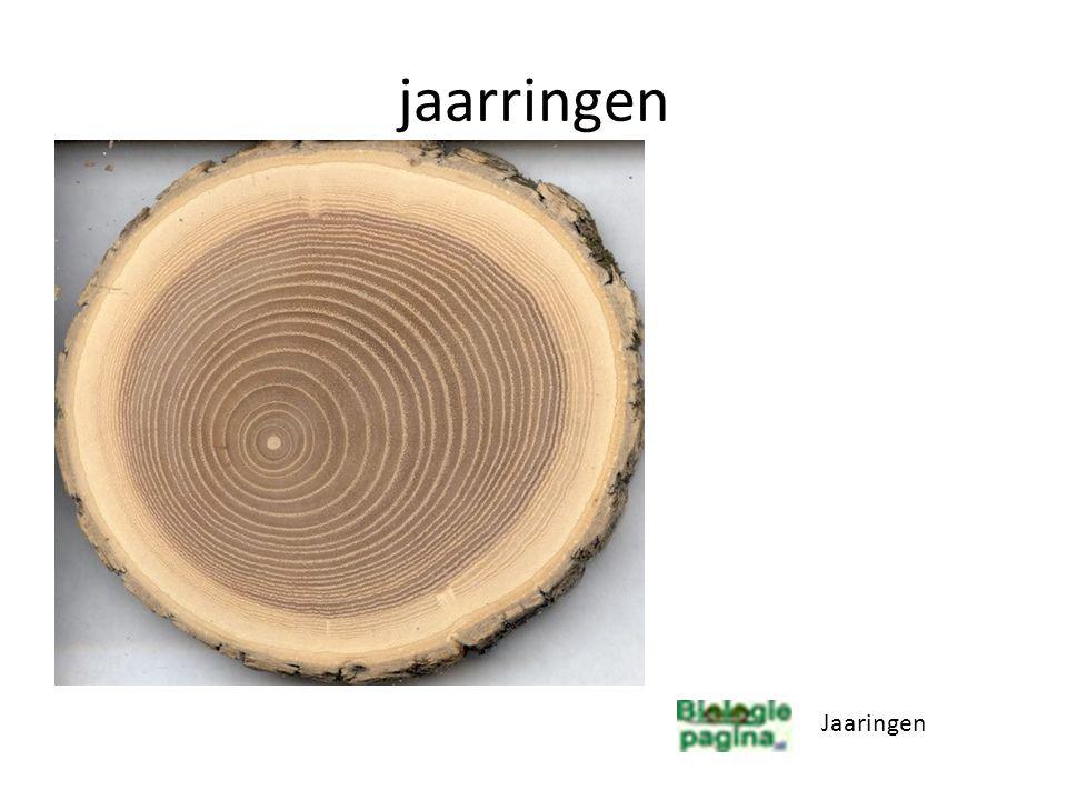 Dikte groei Nieuwe hout en bastvaten ontstaan uit cambiumcellen.