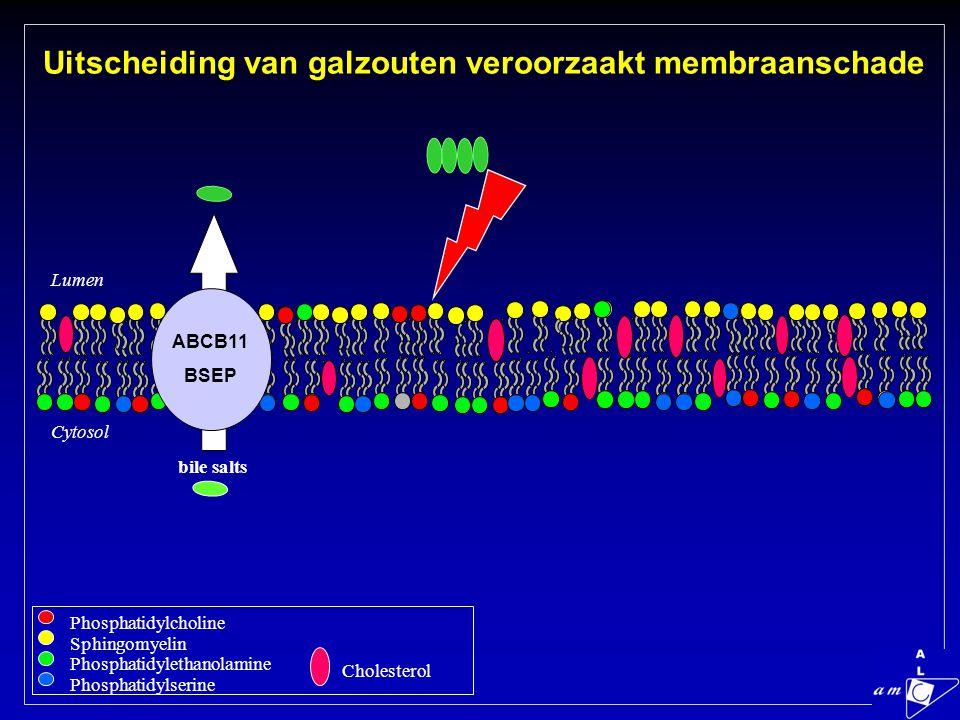 Uitscheiding van galzouten veroorzaakt membraanschade + bile salts Lumen Cytosol Phosphatidylcholine Sphingomyelin Phosphatidylethanolamine Phosphatidylserine Cholesterol ABCB11 BSEP