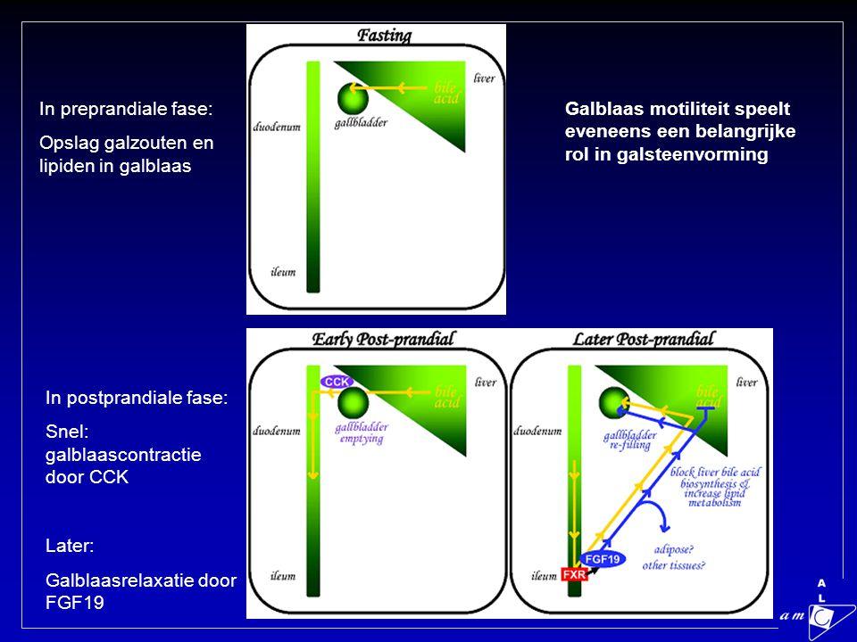 In preprandiale fase: Opslag galzouten en lipiden in galblaas In postprandiale fase: Snel: galblaascontractie door CCK Later: Galblaasrelaxatie door FGF19 Galblaas motiliteit speelt eveneens een belangrijke rol in galsteenvorming