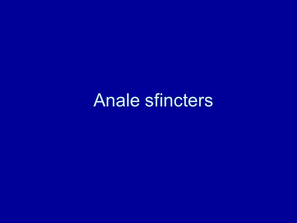 Anale sfincters