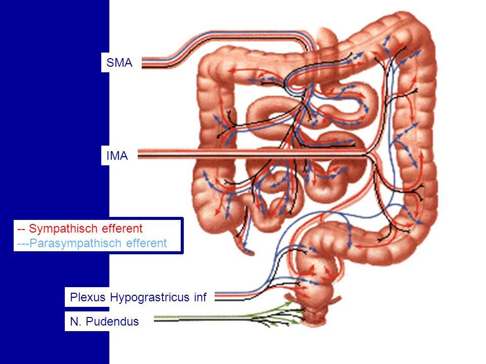 SMA IMA -- Sympathisch efferent ---Parasympathisch efferent Plexus Hypograstricus inf N. Pudendus
