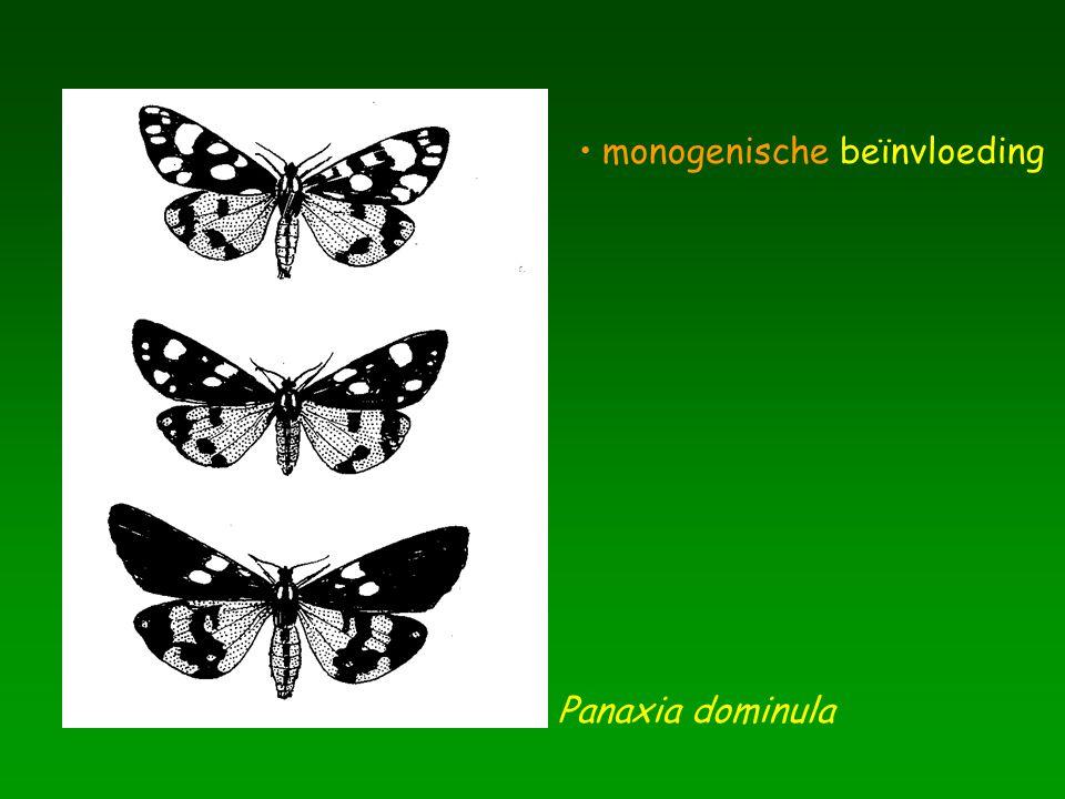 Panaxia dominula monogenische beïnvloeding