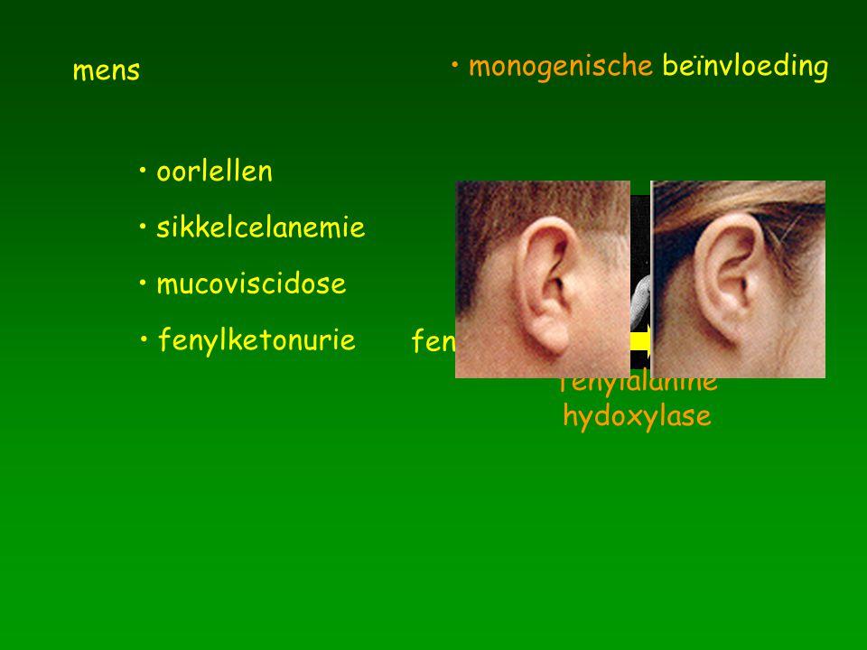 mens oorlellen sikkelcelanemie mucoviscidose fenylketonurie fenylalanine melanine fenylalanine hydoxylase