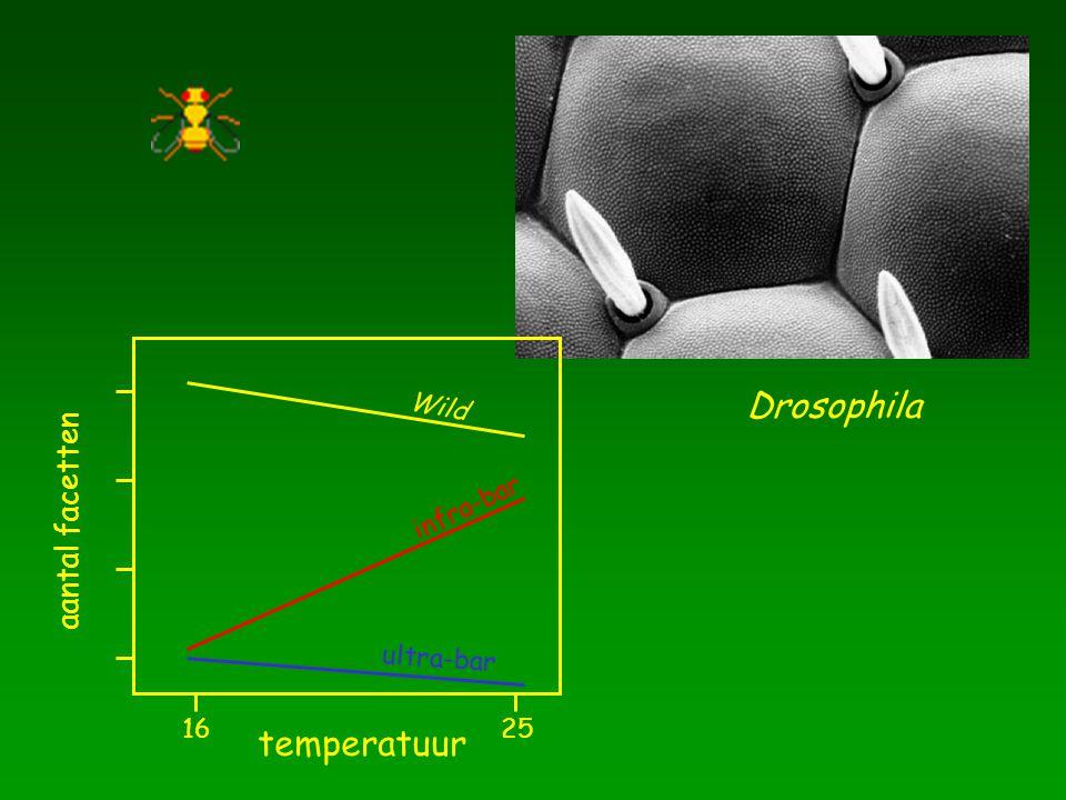 temperatuur 16 25 aantal facetten Wild infra-bar ultra-bar Drosophila