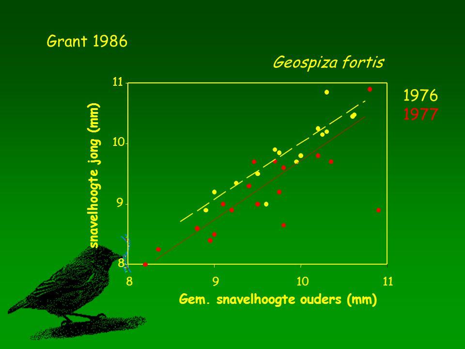Gem. snavelhoogte ouders (mm) 891011 snavelhoogte jong (mm) 8 9 10 11 Geospiza fortis Grant 1986 1976 1977