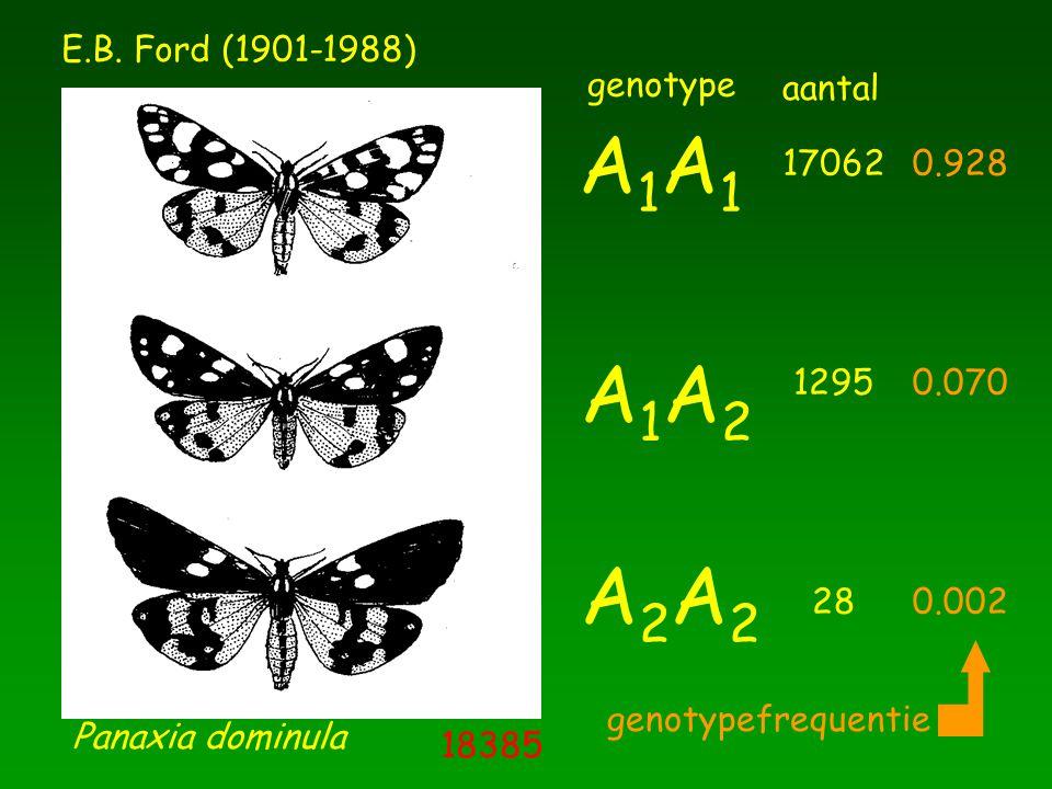Panaxia dominula A1A1A1A1 A1A2A1A2 A2A2A2A2 E.B. Ford (1901-1988) genotype 17062 1295 28 aantal 0.928 0.070 0.002 genotypefrequentie 18385