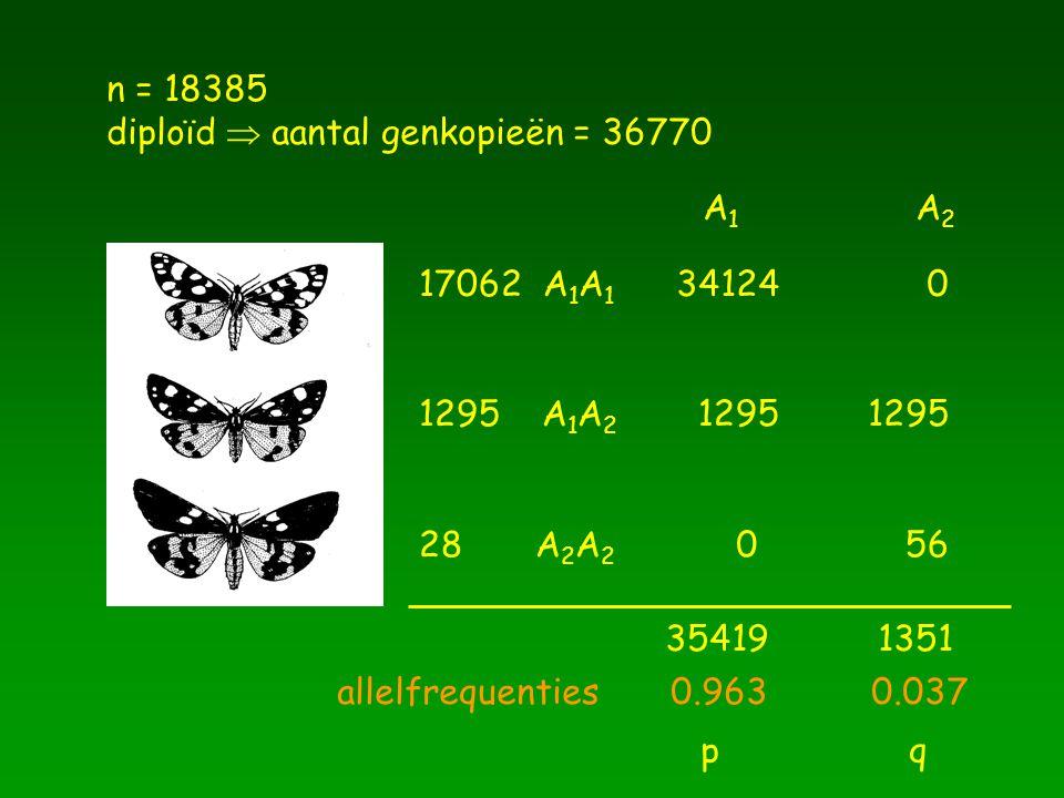 n = 18385 diploïd  aantal genkopieën = 36770 17062 A 1 A 1 1295 A 1 A 2 28 A 2 A 2 A1A2A1A2 341240 1295 56 1295 0 354191351 allelfrequenties 0.963 0.