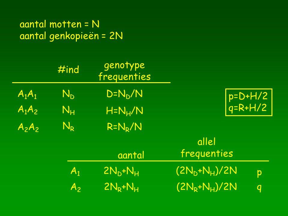 aantal motten = N aantal genkopieën = 2N A1A1A1A1 A1A2A1A2 A2A2A2A2 NDND NHNH NRNR #ind D=N D /N H=N H /N R=N R /N genotype frequenties allel frequent