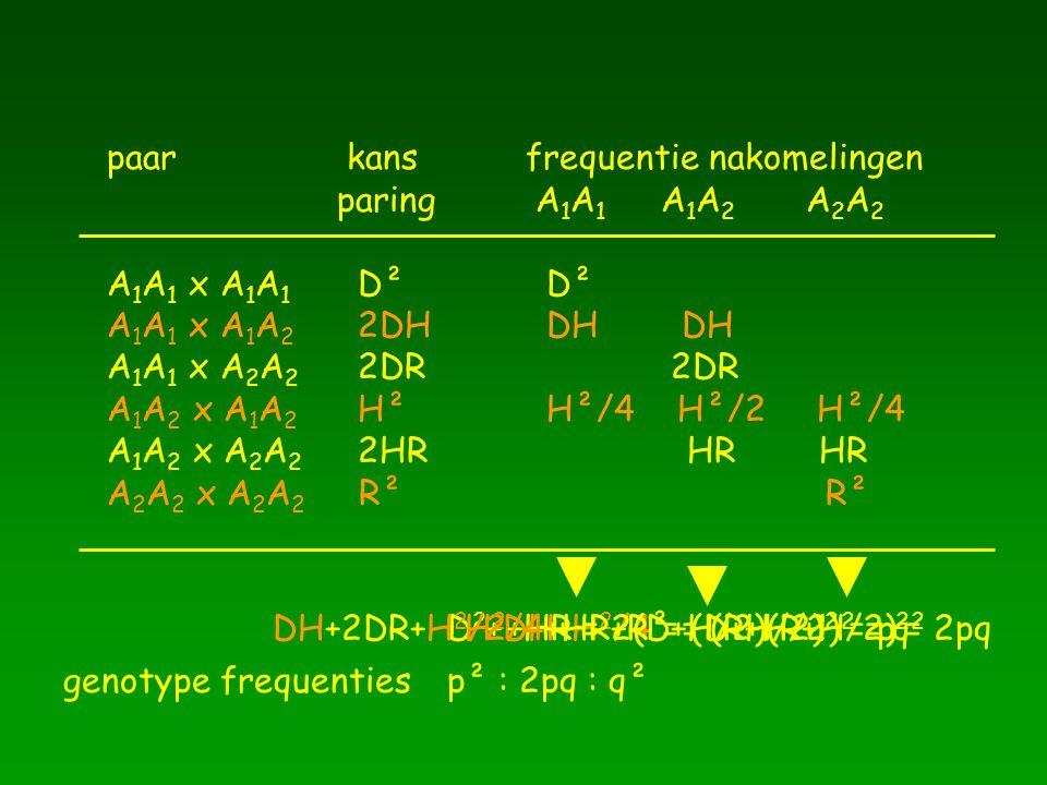 paar kansfrequentie nakomelingen paring A 1 A 1 A 1 A 2 A 2 A 2 A 1 A 1 x A 1 A 1 D² D² A 1 A 1 x A 1 A 2 2DH DH DH A 1 A 1 x A 2 A 2 2DR 2DR A 1 A 2