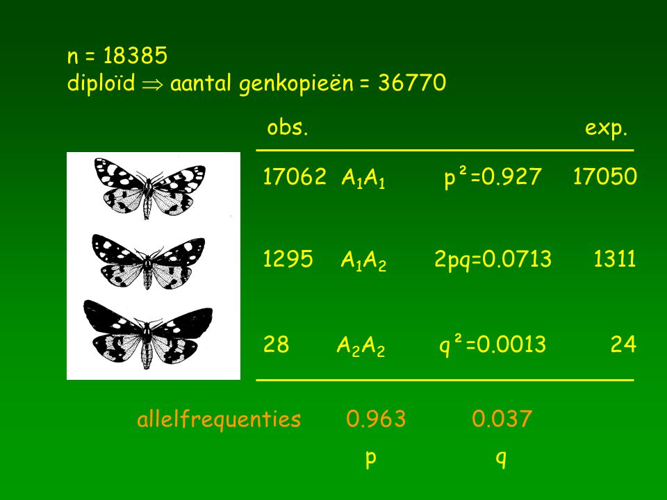 n = 18385 diploïd  aantal genkopieën = 36770 17062 A 1 A 1 1295 A 1 A 2 28 A 2 A 2 allelfrequenties 0.963 0.037 p q p²=0.92717050 2pq=0.0713 q²=0.001