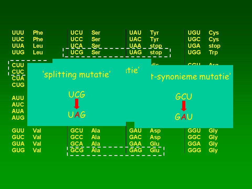 'niet-synonieme mutatie' GCU GAU 'synonieme mutatie' CUU CUC 'splitting mutatie' UCG UAG