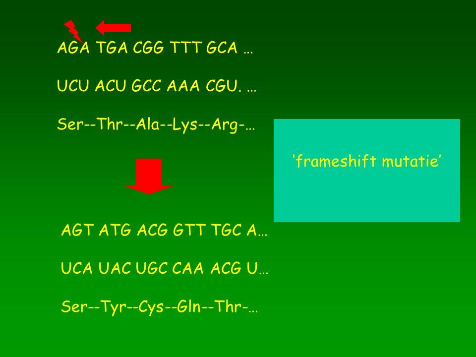 AGA TGA CGG TTT GCA … UCU ACU GCC AAA CGU. … Ser--Thr--Ala--Lys--Arg-… AGT ATG ACG GTT TGC A… UCA UAC UGC CAA ACG U… Ser--Tyr--Cys--Gln--Thr-… 'frames