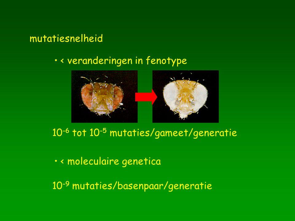 mutatiesnelheid < veranderingen in fenotype 10 -6 tot 10 -5 mutaties/gameet/generatie < moleculaire genetica 10 -9 mutaties/basenpaar/generatie