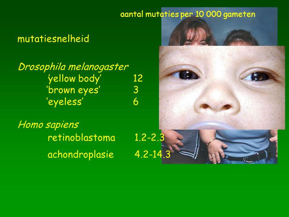 mutatiesnelheid Drosophila melanogaster 'yellow body' 12 'brown eyes' 3 'eyeless' 6 Homo sapiens  achondroplasie4.2-14.3 retinoblastoma1.2-2.3 aantal
