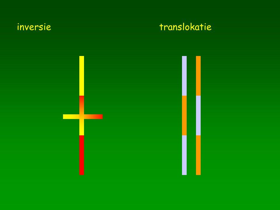 inversietranslokatie