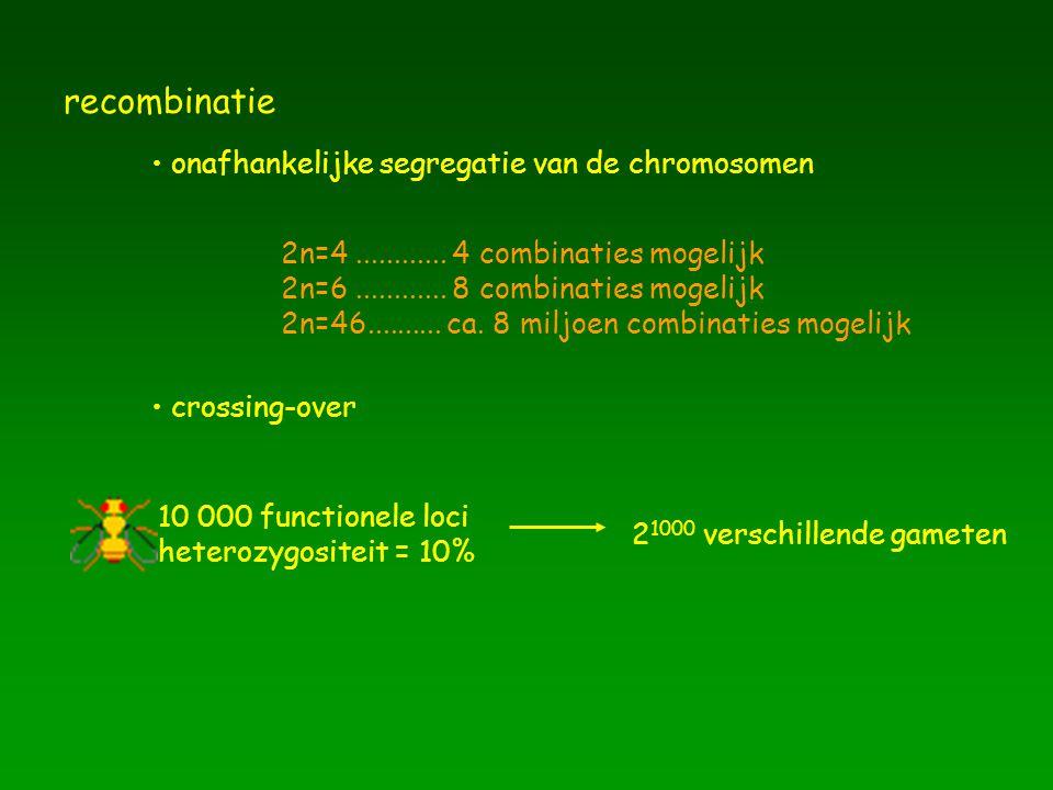 onafhankelijke segregatie van de chromosomen 2n=4............ 4 combinaties mogelijk 2n=6............ 8 combinaties mogelijk 2n=46.......... ca. 8 mil