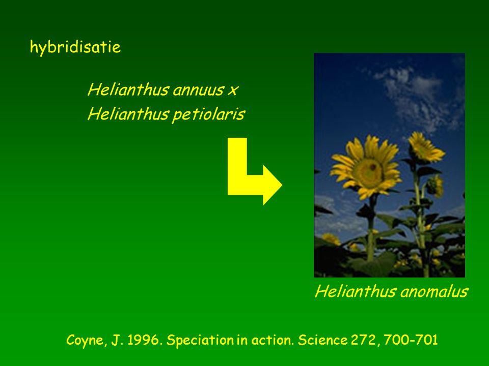 Helianthus annuus x Helianthus anomalus Coyne, J. 1996. Speciation in action. Science 272, 700-701 Helianthus petiolaris