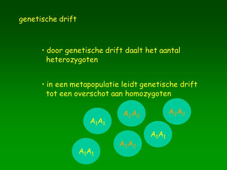 genetische drift door genetische drift daalt het aantal heterozygoten in een metapopulatie leidt genetische drift tot een overschot aan homozygoten A1