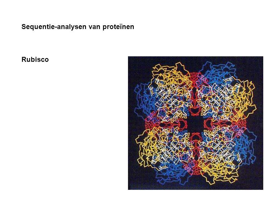 Sequentie-analysen van proteïnen Rubisco