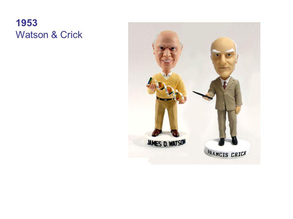 1953 Watson & Crick