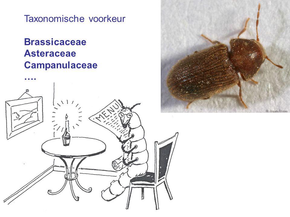 Taxonomische voorkeur Brassicaceae Asteraceae Campanulaceae ….