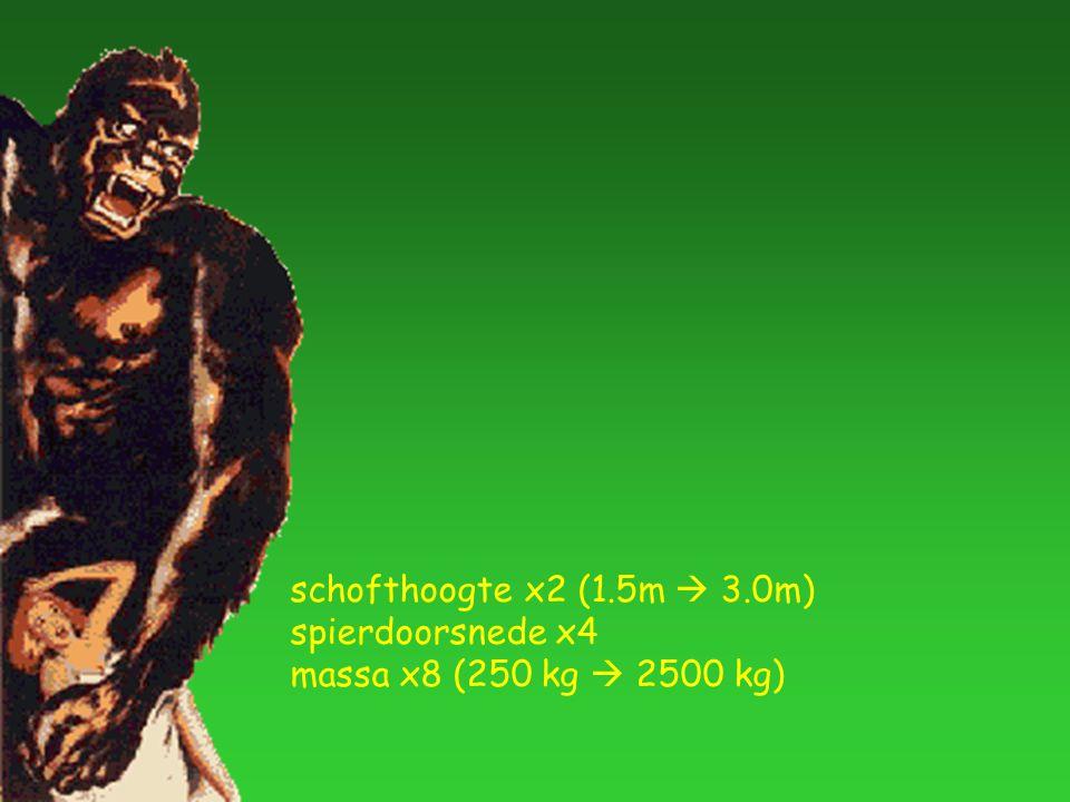 schofthoogte x2 (1.5m  3.0m) spierdoorsnede x4 massa x8 (250 kg  2500 kg)