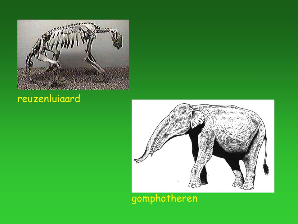 elke tendens in de productie van variante fenotypen, of elke beperking aan de fenotypische variabiliteit, opgelegd door de structuur, de aard, de samenstelling of de dynamica van het ontwikkelingsmechanisme (Maynard-Smith et al.