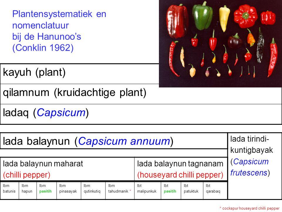 lbm batunis lbm hapun lbm pasitih lbm pinasayak lbm qutinkutiq lbm tahudmanik * lbt malipunkuk lbt pasitih lbt patuktuk lbt qarabaq lada tirindi- kuntigbayak (Capsicum frutescens) lada balaynun maharat (chilli pepper) lada balaynun tagnanam (houseyard chilli pepper) lada balaynun (Capsicum annuum) kayuh (plant) qilamnum (kruidachtige plant) ladaq (Capsicum) * cockspur houseyard chilli pepper Plantensystematiek en nomenclatuur bij de Hanunoo's (Conklin 1962)