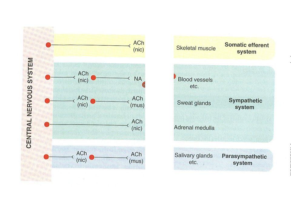 Anticholinerge effecten TCA fenothiazines, thioxantenen carbamazepine H1-blokkers Cyproheptadine Disopyramide ……