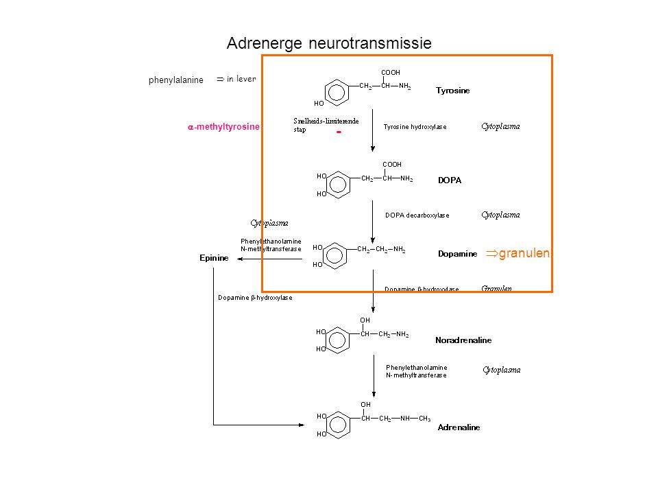Adrenerge neurotransmissie  -methyltyrosine -  in lever phenylalanine................  granulen