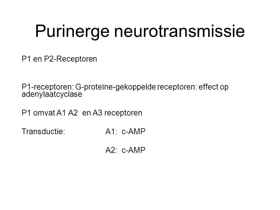 Purinerge neurotransmissie P1 en P2-Receptoren P1-receptoren: G-proteïne-gekoppelde receptoren: effect op adenylaatcyclase P1 omvat A1 A2 en A3 recept