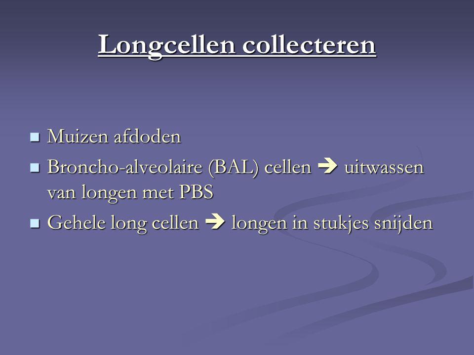 Longcellen collecteren Muizen afdoden Muizen afdoden Broncho-alveolaire (BAL) cellen  uitwassen van longen met PBS Broncho-alveolaire (BAL) cellen  uitwassen van longen met PBS Gehele long cellen  longen in stukjes snijden Gehele long cellen  longen in stukjes snijden