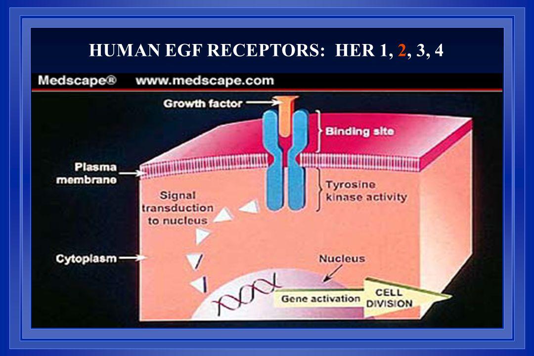 HUMAN EGF RECEPTORS: HER 1, 2, 3, 4